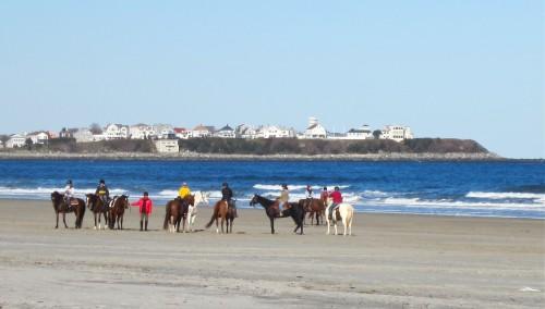 Horses at Hampton