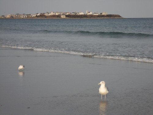 Hampton Beach Seagulls