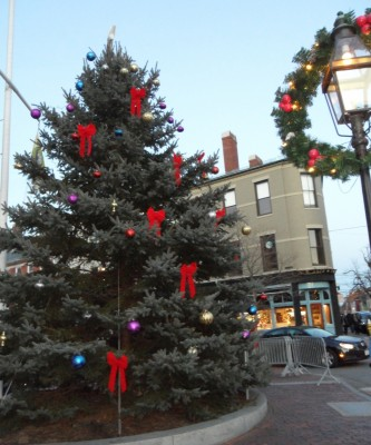 Portsmouth NH Tree